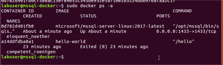 SQL Server 2017 installation on Ubuntu using Docker