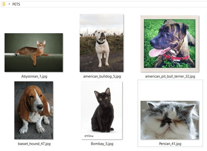 TSQL Distinct Clause - Pet images from Oxford dataset.